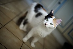 BOOH (Odile ENTRE MER ET MONTAGNE) Tags: cats pets chats feline gatos gatti gattini gattacci animauxdecompagnie impressedbeauty