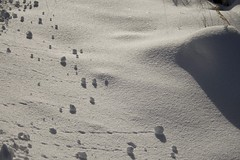 Contours in the snow (hedenljung) Tags: snow contour kontur fotosondag fs140223