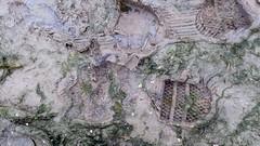 Muddy Argyll wellies (essex_mud_explorer) Tags: mud boots gates argyll rubber wellington wellingtonboots wellies muddy rubberboots gummistiefel wellingtons