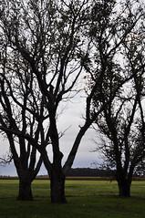 Branch (Agustin Lapajufker) Tags: old autumn naturaleza nature argentina colors field grey three photo reflex vegan amazing buenosaires nikon focus foto campo otoo moment d90