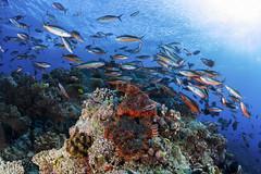 2014 02 VOISIN MALDIVES-6593