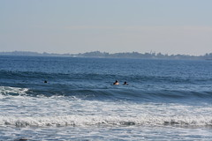 DSC_0028 (aliciadesign) Tags: surf whales bigisland honolii