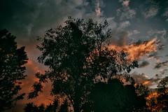 01.31.15 (Adriene Hughes) Tags: trees clouds sandiego palmtrees photoaday cloudporn 2015 softservegirl canon5dmarkii