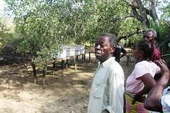 Wary of bees Ihareni