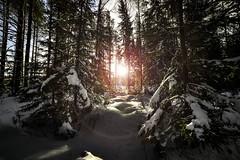 Snow and sunflare (Kasinfoto @ Facebook) Tags: winter snow cold nikon sweden sverige f28 glaskogen sunflare arvika d610 14mm glava samyang