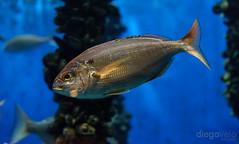Aquarium Finisterrae (Diego Velo) Tags: españa fauna marina aquarium mar spain galicia acuario finisterrae acoruña lacoruña