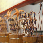 "Fried scorpions on stick<a href=""http://www.flickr.com/photos/28211982@N07/16473650902/"" target=""_blank"">View on Flickr</a>"