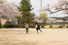 / Hida Takayama (kimtetsu) Tags: people girl japan spring jp  cherryblossom  takayama gifu