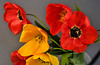 tulip II.jpg (Daniel Gentsch) Tags: tulip color red studio sigmatune danielgentsch photography photos raw nikon d300 kamera nikond300 elektonik objektiv nikor camera glass hardware reflection equipment nikkor dx explore foto flickr shotoftheday me lightroom photo