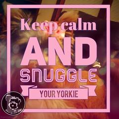 When in doubt (itsayorkielife) Tags: yorkiememe yorkie yorkshireterrier quote