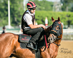 Frosti Agosti (EASY GOER) Tags: park horses horse sports belmont racing races thoroughbred equine