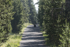 """Black Bear and tourists • <a style=""""font-size:0.8em;"""" href=""""http://www.flickr.com/photos/63501323@N07/26973635976/"""" target=""""_blank"""">View on Flickr</a>"""