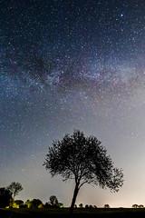 Milky Way somewhere in Schleswig-Holstein (bhansen.kiel) Tags: sky tree night canon germany dark way stars deutschland nacht outdoor silhouettes milky baum kiel dunkel schleswigholstein sterne milchstrase