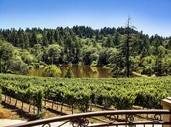 010 (Dan B1033) Tags: napa valley napavalley northern california northerncalifornia norcal wine vineyard grapes lake vino
