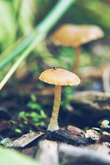Macro Photography Growing Mushroom Tranquility Small Beetle Wildlife & Nature Day Pathway Outdoors Landscape Nature Forestwalk Funghi (Shannon F Gorman) Tags: nature mushroom landscape outdoors day tranquility funghi growing pathway macrophotography wildlifenature forestwalk smallbeetle