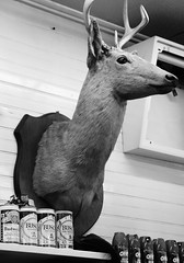 (Casey Lombardo) Tags: blackandwhite bw store deer liquor deerhead trophy stores budweiser liquorstore bwphotography conveniencestore busch bugspray keystoneheights keystoneheightsfl ciappinis