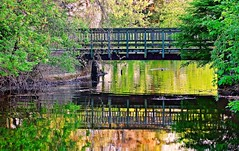 Riverside Park, Cambridge (Eyad Elbayoumi) Tags: park bridge reflection tree green water river big riverside outdoor fave