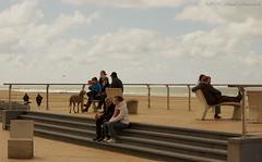 Belgian coast (Natali Antonovich) Tags: family portrait dog animal seaside couple pair lifestyle stairway relaxation oostende seashore seasideresort belgiancoast seaboard