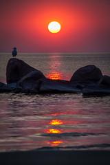 Sunset (skram1v) Tags: sunset canada fire seagull smoke air manitoba lakewinnipeg arthurbeach may2016