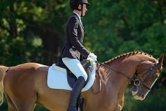 Backlight (Tackshots) Tags: horse illinois riding barrington dressage eventing horsetrials frvpc