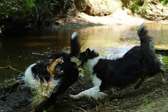 Shut up dog! (GelbQwer) Tags: wood dog chien white lake black color dogs nature creek river woods perfect colorful natur best perro bach hund stick moment fluss wald farbe hunde farben wlder