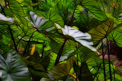 ABSTRACT LEAVES (grahamparsons_1) Tags: leaves foliage waterlillies
