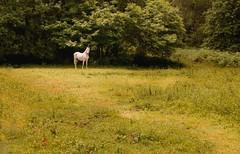 Fantasy (Masterdreams) Tags: world travel magic fantasy unicorn magia fantasyworld unicornio