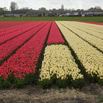 Spring in the Netherlands thumbnail
