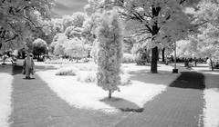 A Walk (in the Park) (DomiKetu) Tags: park blackandwhite bw white man black monochrome ir mono blackwhite walk panasonic romania infrared sibiu blackwhitephotos tz10