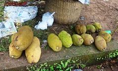 Ponnos (joegoauk73) Tags: goa jackfruit joegoauk