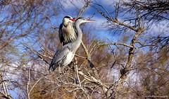 Regarder dans la mme direction........ (Malain17) Tags: nature photography image pentax photographers arbres capture animaux oiseaux camargue