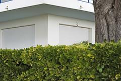France (La Baule), 2010 (Joseff_K) Tags: tree hedge shutter arbre labaule haie volet