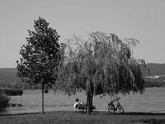 Pleasure of reading (vegeta25) Tags: trees summer blackandwhite bw lake tree bike reading fuji part fujifilm balaton pleasure t tpart myfuji s3200 hurrayweareonholiday