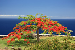 in bloom (terri-t) Tags: ocean sea tree water landscape islands cliffs atlantic explore bloom vista canary lapalma cpl tijarafe