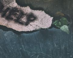 17..71 (WestonEyes) Tags: garden message flood floating note help organic sinking drowning muted westoneyes