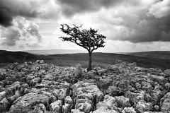 (rachele2595) Tags: outdoors exploring yorkshire lonetree wharfedale yorkshiredales limestonepavement conistone samsungnx1000