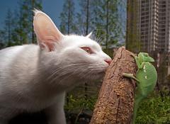 LAOWA 15mm F4 WIDE ANGLE MACRO (LAOWA LENS) Tags: white macro tree green architecture cat angle wide shift lizard 15mm laowa