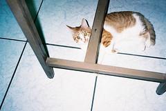 ( ourutopia) Tags: film fuji fujifilm fujicolor yashica t2 t3 t4 t5 cat meow mew miao neko room desk floor
