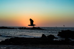 Essaouira Sunset (Algol69) Tags: sunset sky port seagull morocco marocco essaouira gabbiano