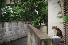 /Higashikurume,Tokyo (eisei_toshi) Tags: powershot    g7x