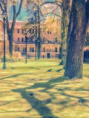 Santa Fe Ravens (inlightful) Tags: park trees newmexico santafe southwest ir infrared raven nir nearinfrared