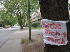 Save us! (FotoTrenz NRW) Tags: tree green stadt grn duisburg bume baum allee platanen sauerstoff abholzen strase baumschutz koloniestrase