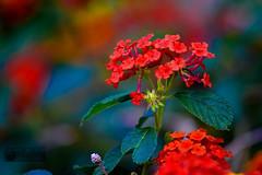 Jardin de Ayora. Valencia (marcus turkill) Tags: flowers flores valencia garden jardin profundidaddecampo nikond3300