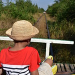 Boy Watching Another Bamboo Train in the Distance thumbnail