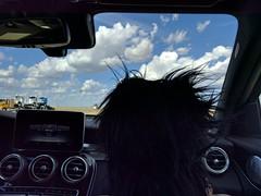 Molly on the road (ashabot) Tags: road travel bluesky roadtrip molly crosscountry blueskies roaddog