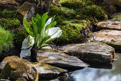 clingendael-7704 (Arie van Tilborg) Tags: japanesegarden hague thehague clingendael japansetuin clingendaelestate landgoedclingendael arievantilborg