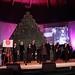 Living Christmas Tree 2012