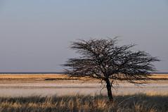 Etosha National Park, Kunene, Namibia. (Marie-Laure Even) Tags: voyage africa park trip travel family famille autumn wild nature june automne landscape juin african au roadtrip southern national paysage namibia parc commonwealth etosha africain afrique namibian sauvage southernafrica namibie afric kunene sadc australe 2013 namibië etoshanationalpark afriqueaustrale namibienne commonwealthofnations namibien republicofnamibia marielaureeven républiquedenamibie