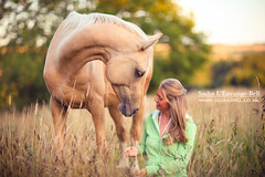 Loving Look - Day 330/365 (Sasha L'Estrange-Bell) Tags: summer portrait horse love bokeh horsey palomino palominohorse sashabell oliviabell sashabellphotography tbsart