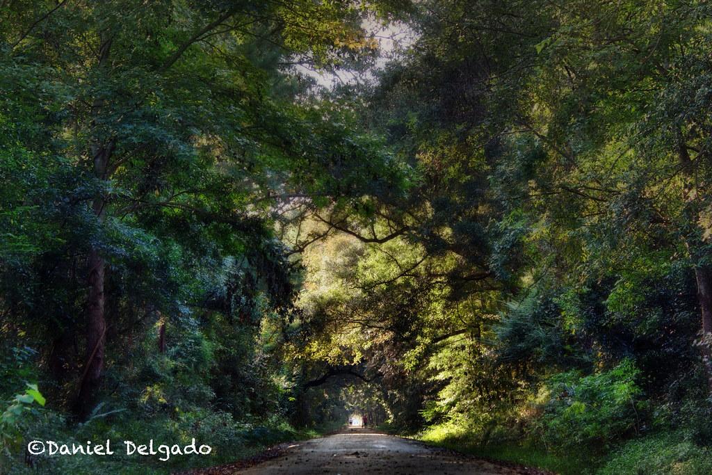 ... camino artistic path creative southcarolina charleston trail bosque